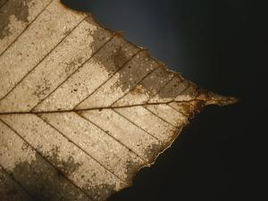 A Close View of a Leaf in Autumn Colors by Roy Gumpel