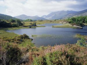 Upper Lake and Macgillycuddy's Reeks, Ring of Kerry, Killarney, Munster, Republic of Ireland (Eire) by Roy Rainford
