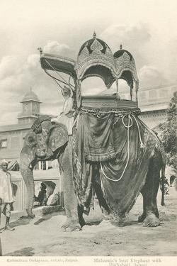 Royal Elephant with Howdah, India