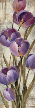 Royal Purple Tulips II Crop