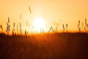 Dreamy Summer Grass Background at Sunset by rtsubin
