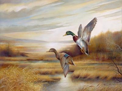 Mallards by Ruane Manning