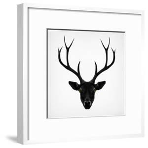 The Black Deer by Ruben Ireland
