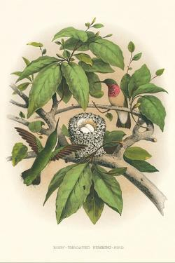 Ruby-Throated Hummingbird Nest and Eggs