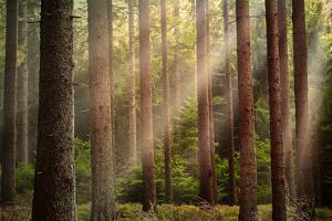 Sunlight through Forest by Rudolf Vlcek