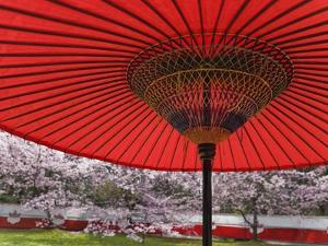 Red Japanese Parasol and Pink Cherry Blossoms by Rudy Sulgan