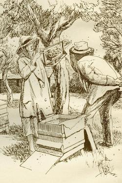 Rural Beekeeping in the Early Twentieth Century