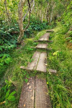 Boardwalk on the Alakai Swamp Trail, Kokee State Park, Kauai, Hawaii, USA. by Russ Bishop