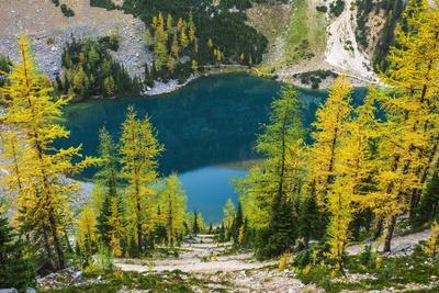 Fall larch trees and hikers on trail above Lake Agness, Banff National Park, Alberta, Canada