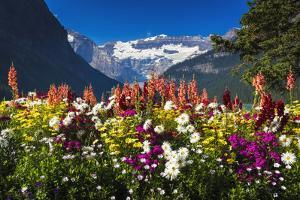Flowers at Lake Louise under Mount Victoria, Banff National Park, Alberta, Canada by Russ Bishop