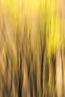 Forest Abstract, California, Usa by Russ Bishop