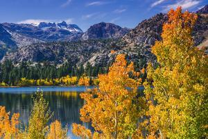 Golden Fall Aspen at June Lake, Inyo National Forest, Sierra Nevada Mountains, California, Usa by Russ Bishop