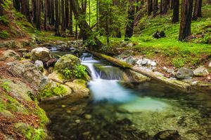 Hare Creek and Redwoods, Limekiln State Park, Big Sur, California, Usa by Russ Bishop