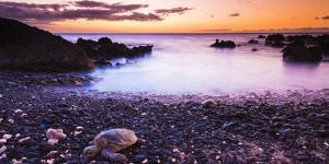 Hawaiian Green Sea Turtles on a Lava Beach at Sunset, Kohala Coast, the Big Island, Hawaii by Russ Bishop
