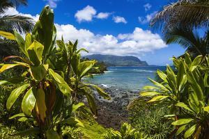 Hideaways Beach and the Na Pali Coast through tropical foliage, Island of Kauai, Hawaii, USA by Russ Bishop