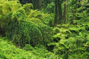 Lush vegetation at Akaka Falls State Park, Hamakua Coast, Big Island, Hawaii, USA by Russ Bishop