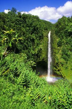 Lush vegetation framing Akaka Falls, Akaka Falls State Park, The Big Island, Hawaii, USA. by Russ Bishop