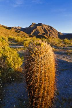 Morning light on cholla and barrel cactus under Indianhead Peak, Anza-Borrego Desert State Park, CA by Russ Bishop