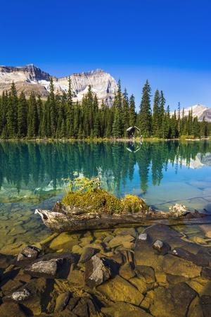 Mount Odaray above Lake O'hara, Yoho National Park, British Columbia, Canada