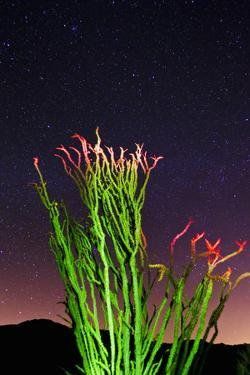 Ocotillo under the Milky Way, Anza-Borrego Desert State Park, California, USA by Russ Bishop