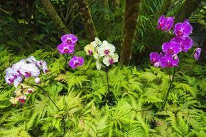 Orchids at the Hawaii Tropical Botanical Garden, Hamakua Coast, the Big Island, Hawaii by Russ Bishop