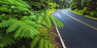 Park road through the fern forest, Hawaii Volcanoes National Park, Hawaii, USA by Russ Bishop