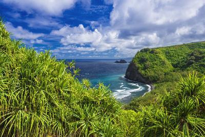 Pololu Valley and beach through hala trees, North Kohala, The Big Island, Hawaii, USA