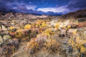 Sagebrush in the Alabama Hills under the Sierra Nevada Mountains, Owen's Valley, California, Usa by Russ Bishop