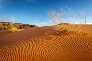 Sand dunes and grass, Coral Pink Sand Dunes State Park, Kane County, Utah, USA. by Russ Bishop