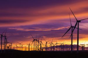 Silhouetted wind turbines at sunset, Mojave, California, USA by Russ Bishop