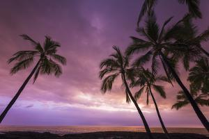 Sunset through palm trees at Pu'uhonua o Honaunau National Historical Park, Kona Coast, Big Island by Russ Bishop