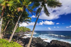 Surf and palms along the Puna Coast, The Big Island, Hawaii, USA by Russ Bishop