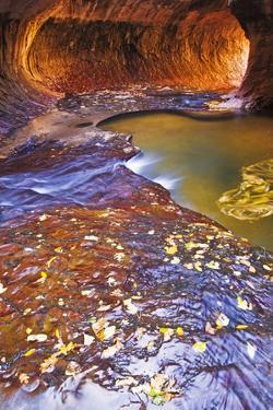 The Subway Along North Creek, Zion National Park, Utah, Usa by Russ Bishop
