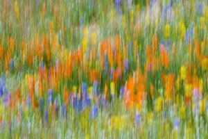 Wildflower abstract, Tehachapi Mountains, Angeles National Forest, California, USA by Russ Bishop