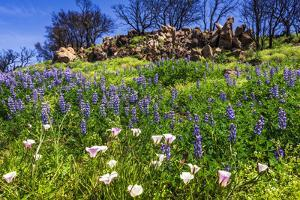 Wildflowers at Charmlee Wilderness Park in the Santa Monica Mountains, Malibu, California, USA. by Russ Bishop