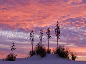 Yucca at Sunset in White Sands National Monument by Russell Burden