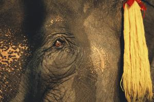 Thailand, Elephant Eye by Russell Young