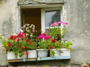 Window in Old Town, Istria, Croatia by Russell Young