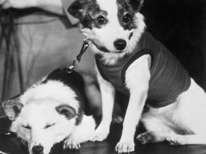 Russian Space Dogs Belka and Strelka