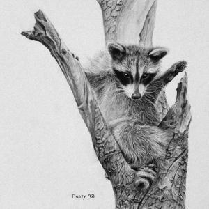 Bandit by Rusty Frentner