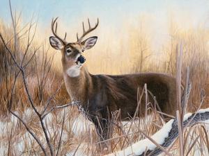 Big Buck by Rusty Frentner
