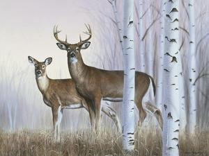 Deer in Birch Woods by Rusty Frentner
