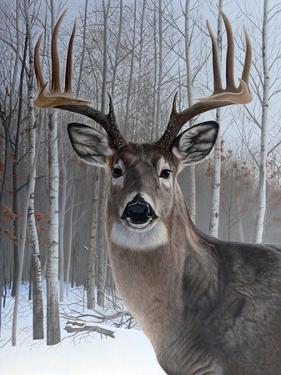 Deer by Rusty Frentner