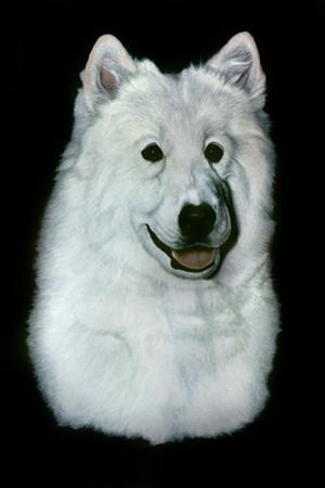 Dog Thirteen