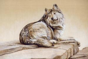 El Lobo by Rusty Frentner