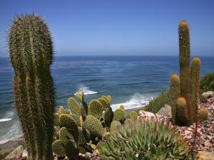 Cacti in Gardens of Fellowship of Self Realization with Pacific Ocean Beyond by Ruth Eastham & Max Paoli