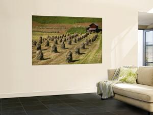 Haystacks in Field with Wooden Hut in Background by Ruth Eastham & Max Paoli