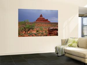Lone Tree with Rock Formations in Desert Landscape with Storm Clouds in Valley of the Gods by Ruth Eastham & Max Paoli