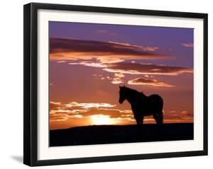A Wild Horse Lingers at the Edge of the Badlands Near Fryburg, N.D. by Ruth Plunkett
