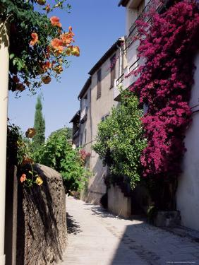 Brightly Coloured Flowers in Village Street, Grimaud, Var, Cote d'Azur, Provence, France, Europe by Ruth Tomlinson